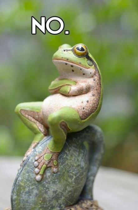 satisfied-frog