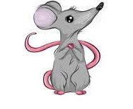 timid mouse2