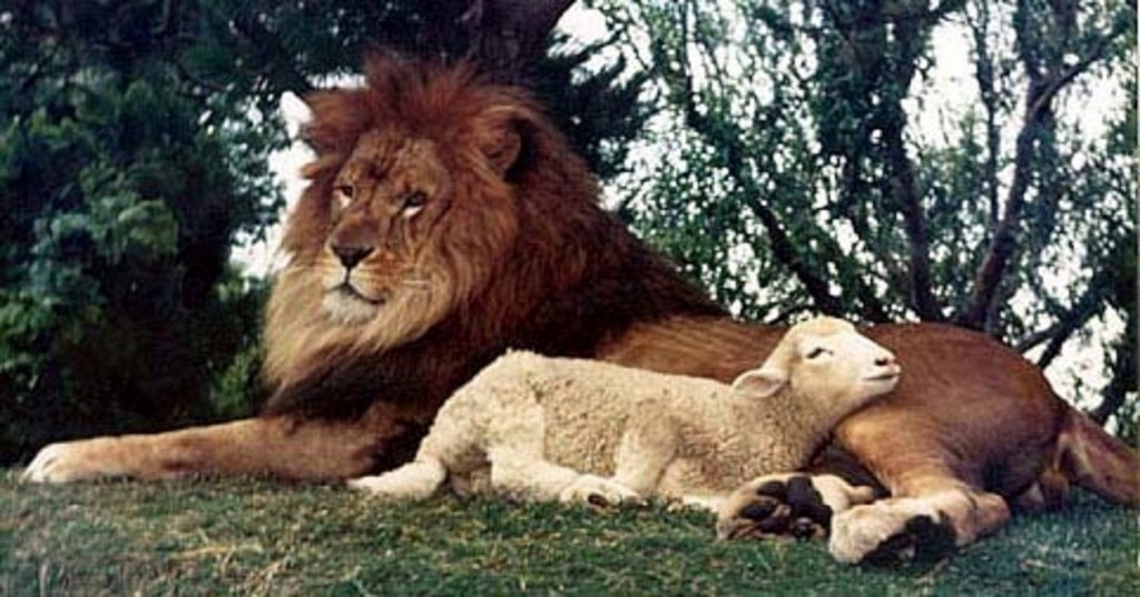 lion-and-lamb-lie-down-together1